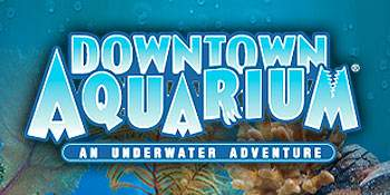 Downtown Aquarium - An Underwater Adventure