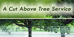 Tree Surgeons In Jacksonville Fl
