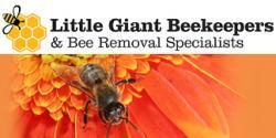 Little Giant Beekeepers & Bee Removal Specialists