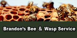 Brandon's Bee & Wasp Service