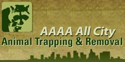 AAAA All City Animal Trapping